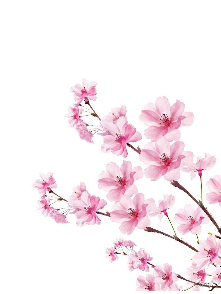 Sakura Cherry Blossom A Line Dress By Xing7 Sakura Cherry Blossom Cherry Blossom Tree Cherry Blossom