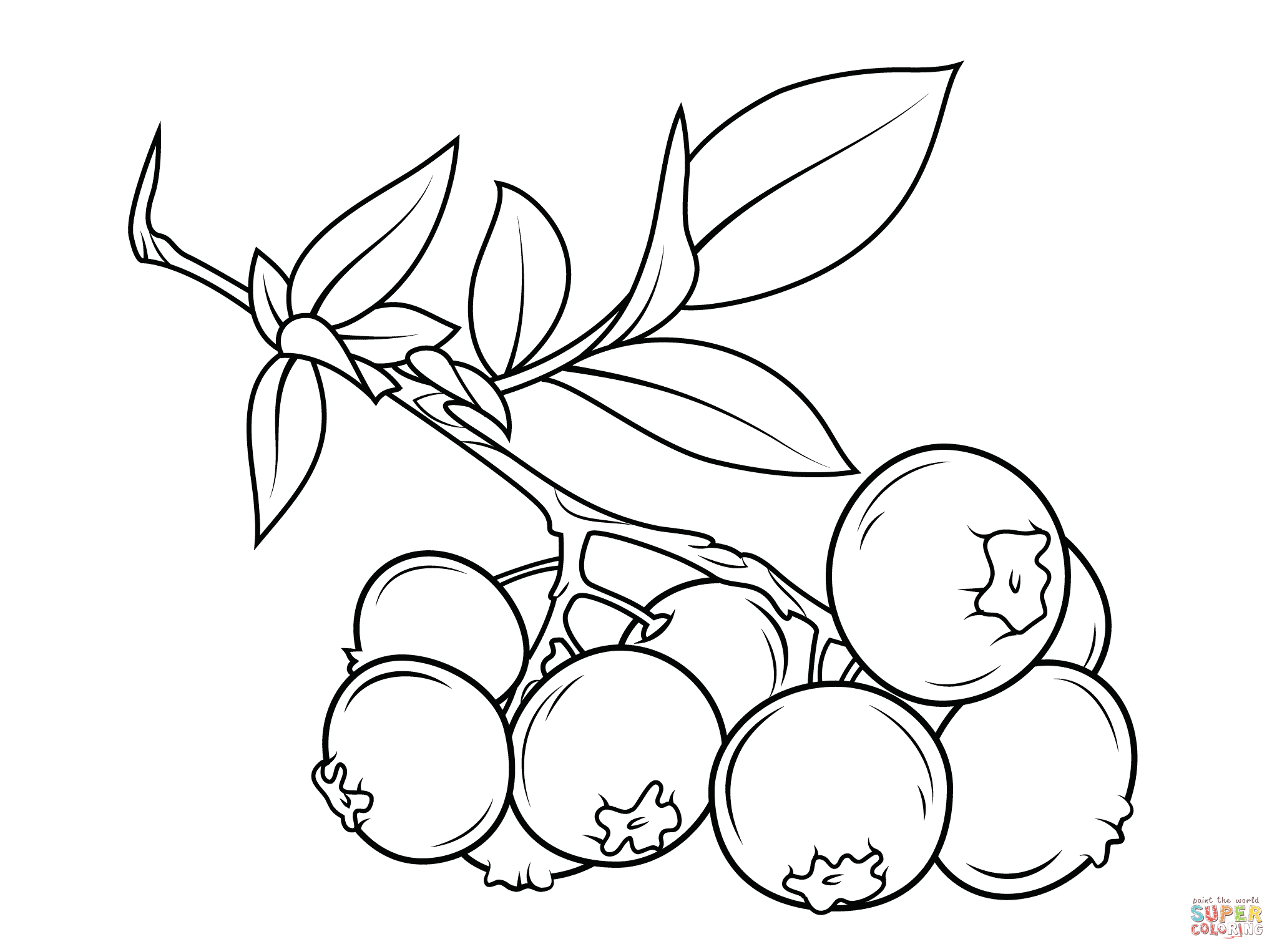 Blueberry Branch Coloring Pages Line Art Images Free Coloring Pages