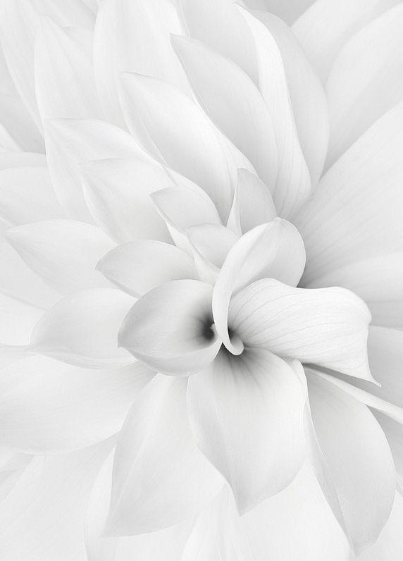 Beautiful....                                                                                                                                                                                 Mehr #purewhite