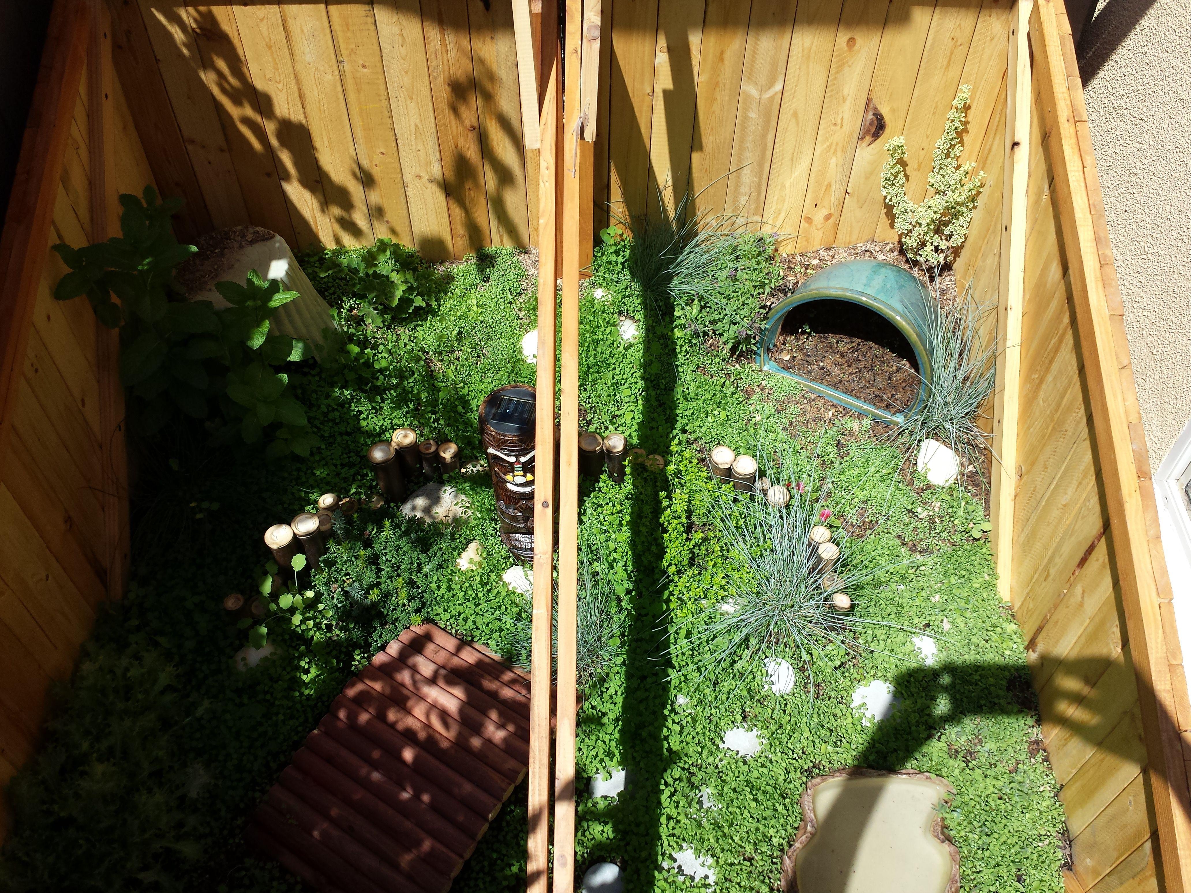 outdoor tortoise enclosure for hermann u0027s tortoise russian