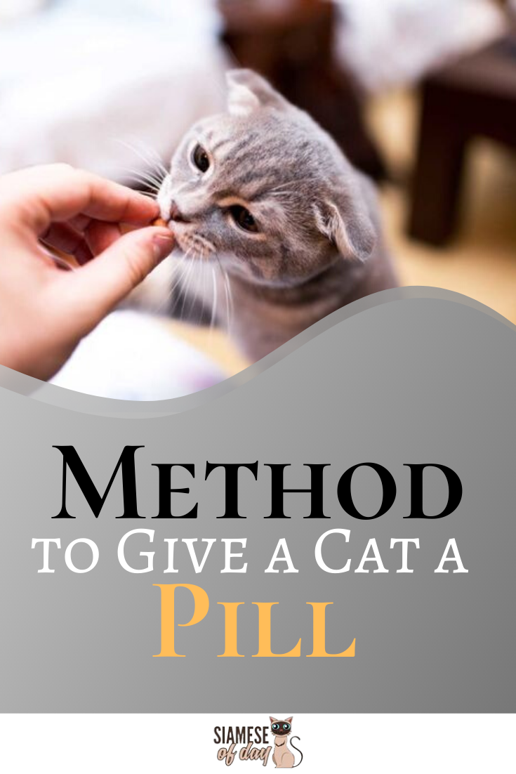 How To Give Your Cat A Pill Quick Tips Tricks Siamese Of Day Cats Cat Health Kitten Care