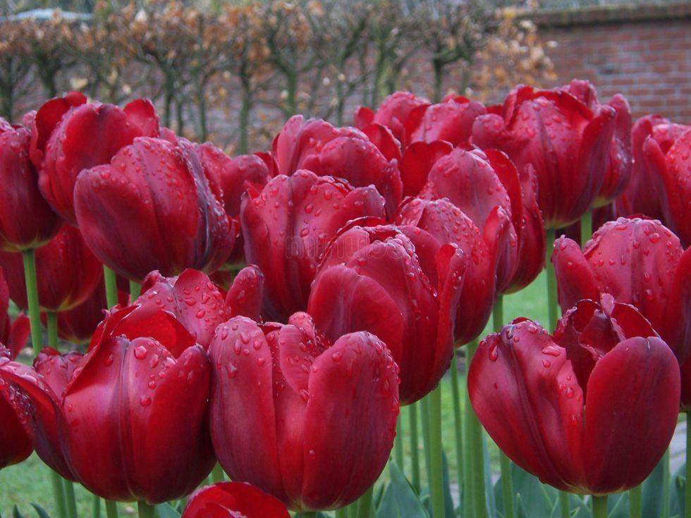 Foto sobre Jardines Keukehnof de adriana-martinez