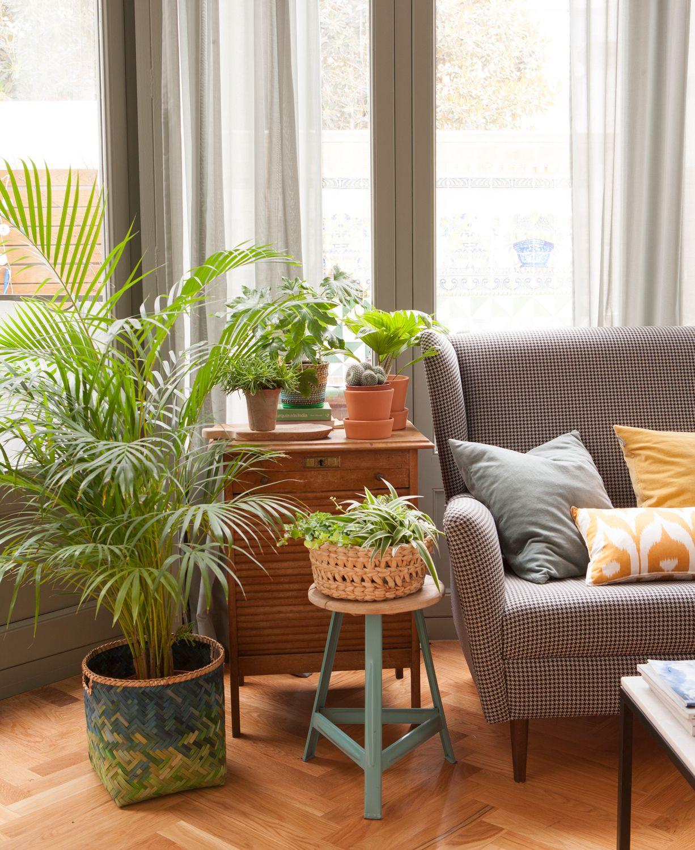 En El Salon Plantas Plant Decor Interior Garden Y House Design