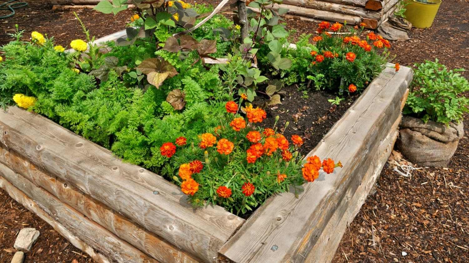 How to Build a Raised Flower Bed Garden | Garden beds ...