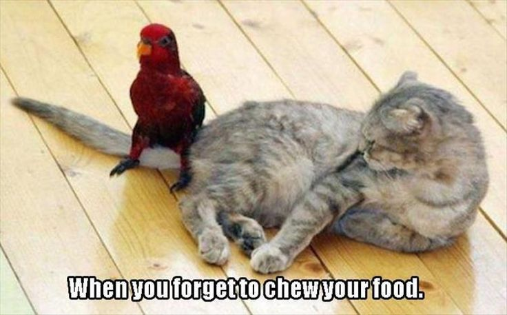 Funny Animal Pictures Of The Day - 25 Pics http://ibeebz.com