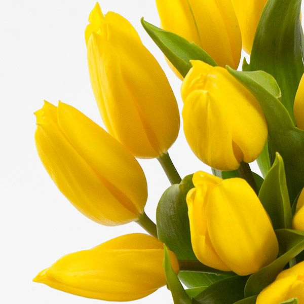 20 Yellow Tulips With Vase Flower Delivery Gift Service Uk Yellow Tulips Tulips Flower Delivery