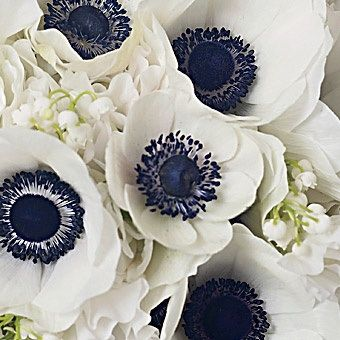 Anemone Bouquet With Blue Centers And White Hydrangeas Anemone Wedding Flowers Beautiful Flowers