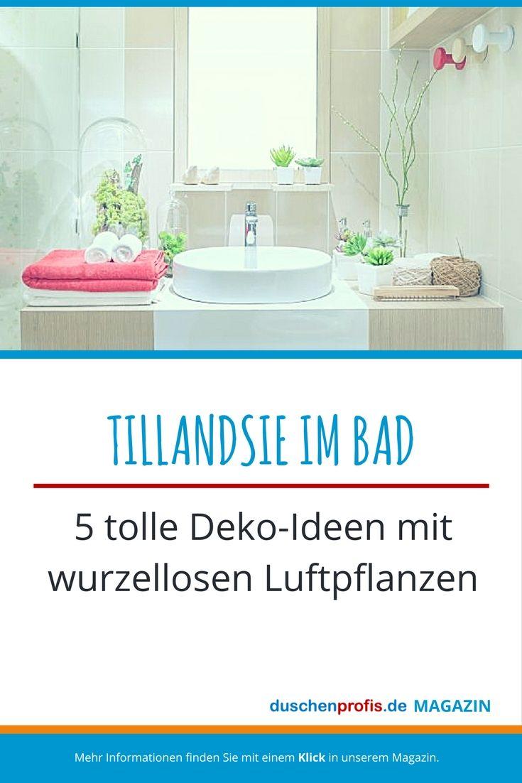 Tillandsie die Luftpflanze ohne Wurzel als Badezimmerdeko ...
