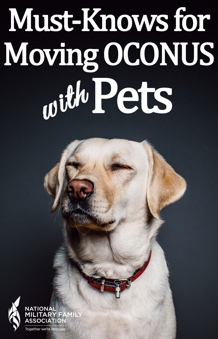 Moving overseas with pets Oh my gosh! not easy. Dry dog