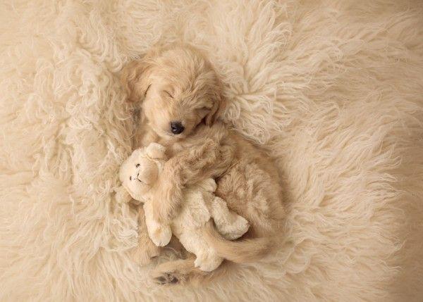 Puppy Love Nala Puppy Litter Newborn Puppies Puppies