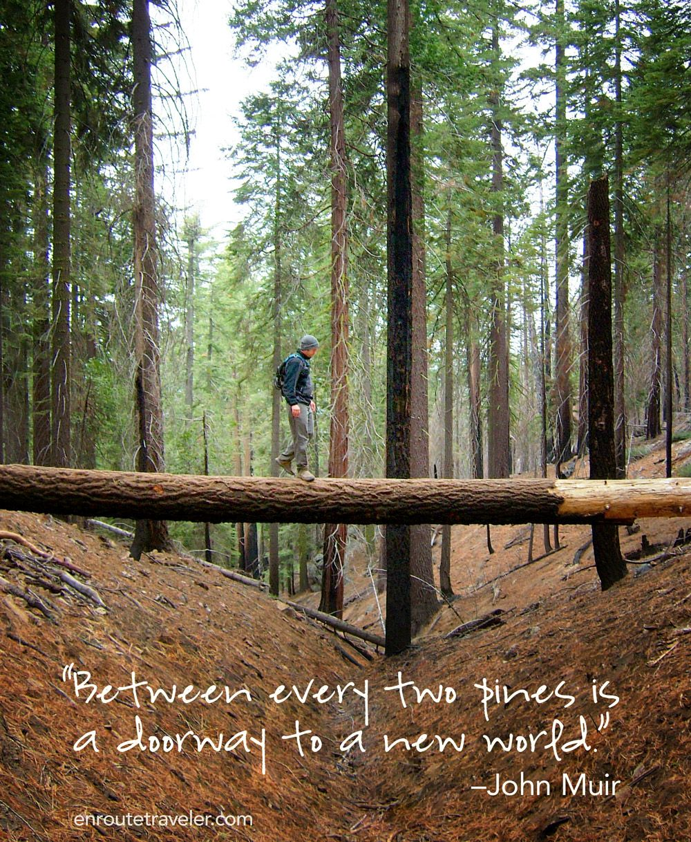 """""""Between every two pines is a doorway to a new world."""" –John Muir"""