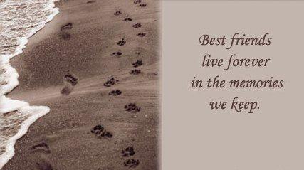 Best Friends Live Forever Losing A Pet Pet Loss Pet Loss Quotes