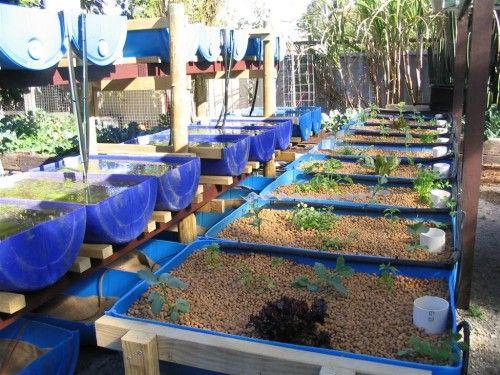 Systems Backyard Aquaponics Aquaponics Gardening 400 x 300