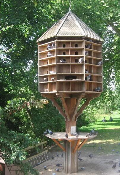Raising pigeons and examples of pigeon houses big for Dove bird house