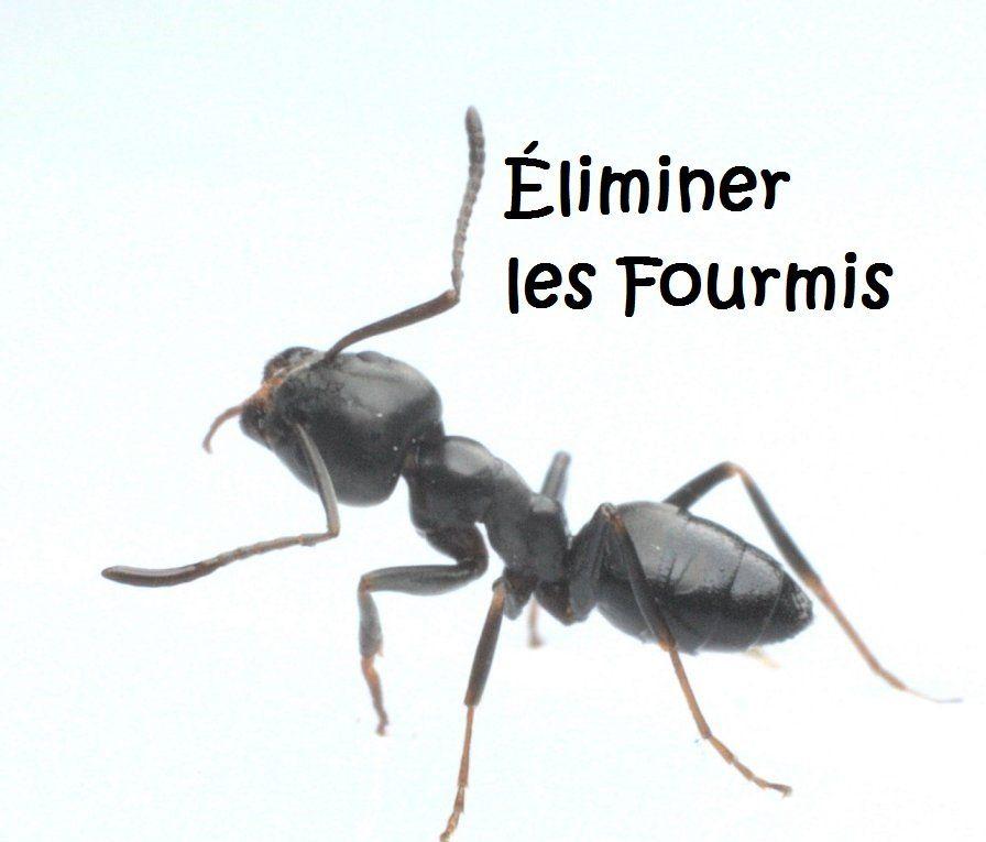 comment liminer les fourmis naturellement dans la maison. Black Bedroom Furniture Sets. Home Design Ideas