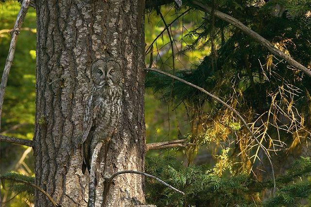 Camouflage et mimétisme chez les Animaux Photo