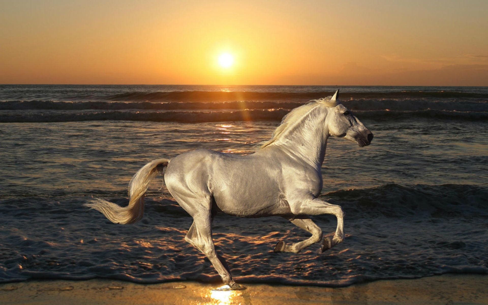 Beautiful Wallpaper Horse Android - b4e224c26e5f5c12cb0ff2a41521b9fb  Collection_68125.jpg