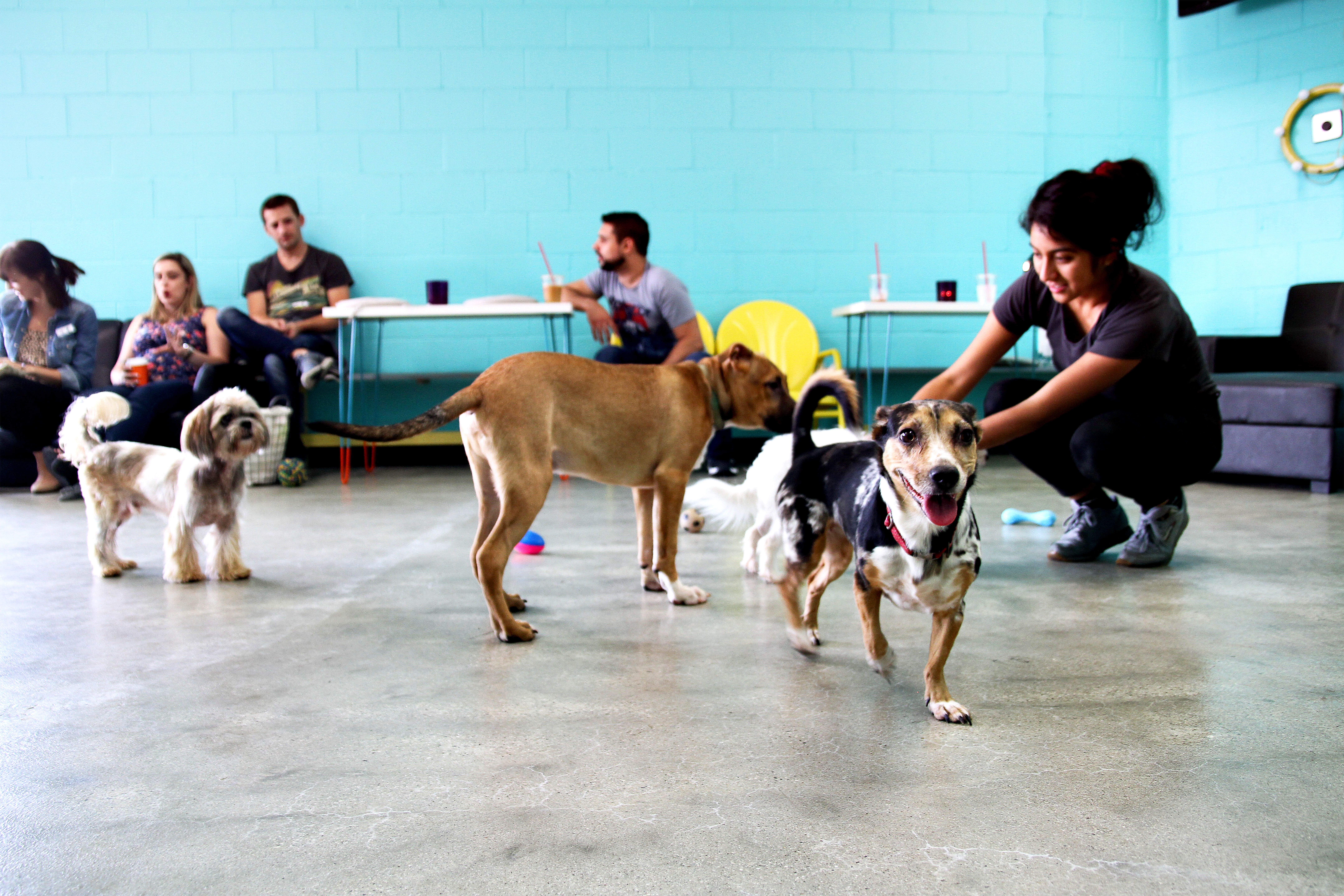 The Dog Cafe Coffee Cups Rescue Pups In Los Angeles Dog Cafe