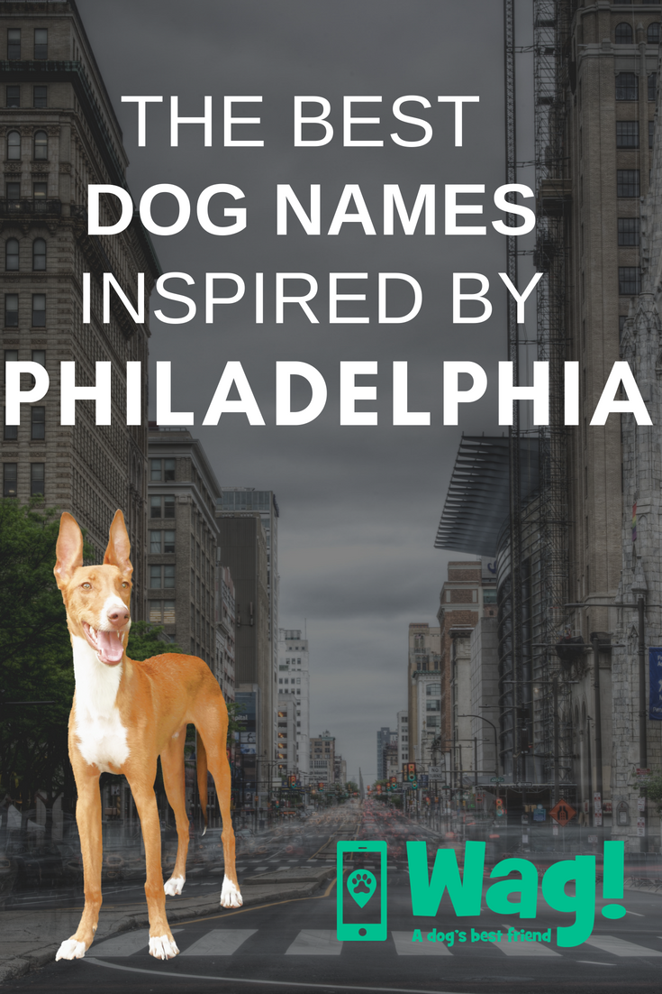 The Best Dog Names Inspired By Philadelphia Bestdognames Philadelphia Pennsylvania Wagwalking Wagdogwalking Dog Names Best Dog Names Top Dog Names