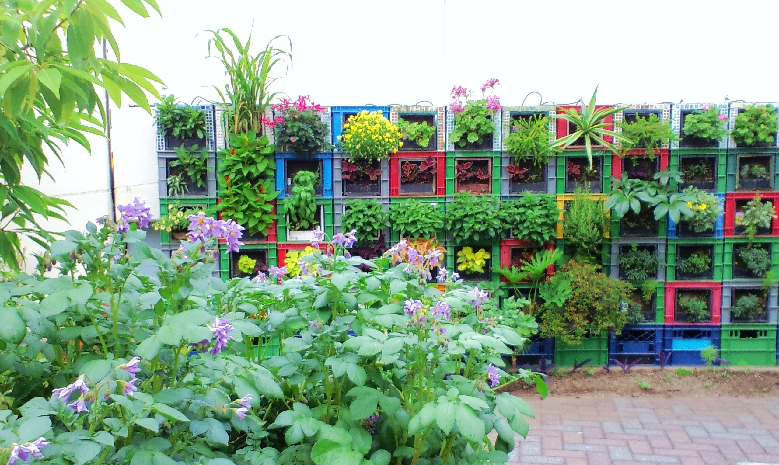 Milk crate vegetable vertical garden and potatoes garden - Grey gardens dive per sempre ...