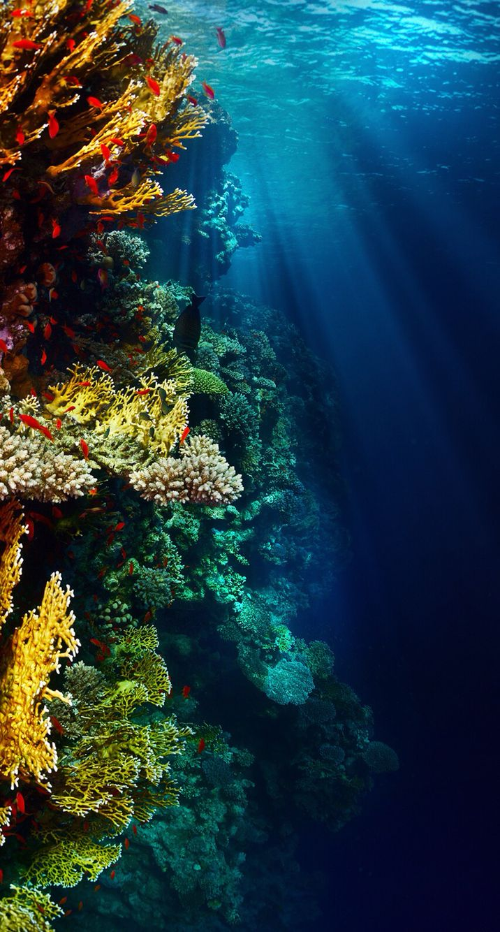 Amazing Underwater Reef | Scuba | Underwater wallpaper, Ocean wallpaper, Iphone wallpaper underwater