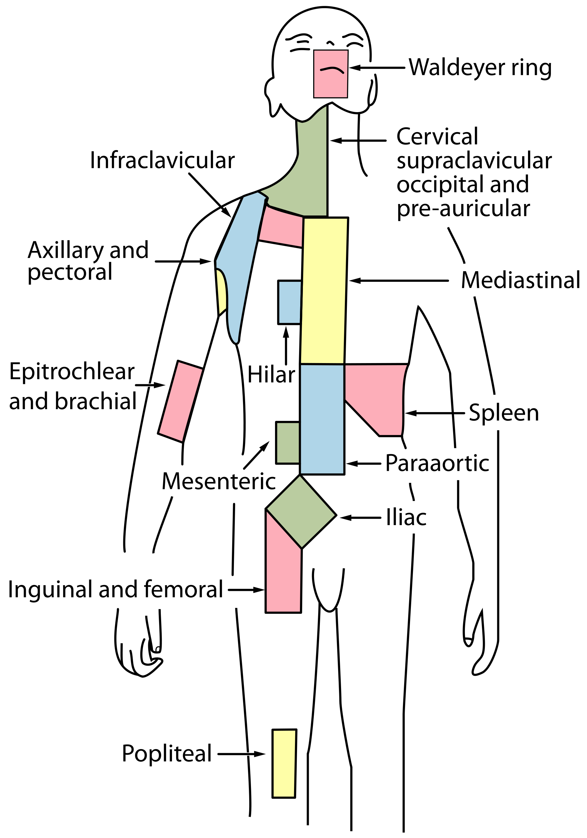 lymph node regions.svg   get these lymph nodes drained   pinterest