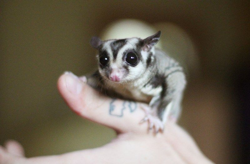 Pin On Cute Exotic Pets