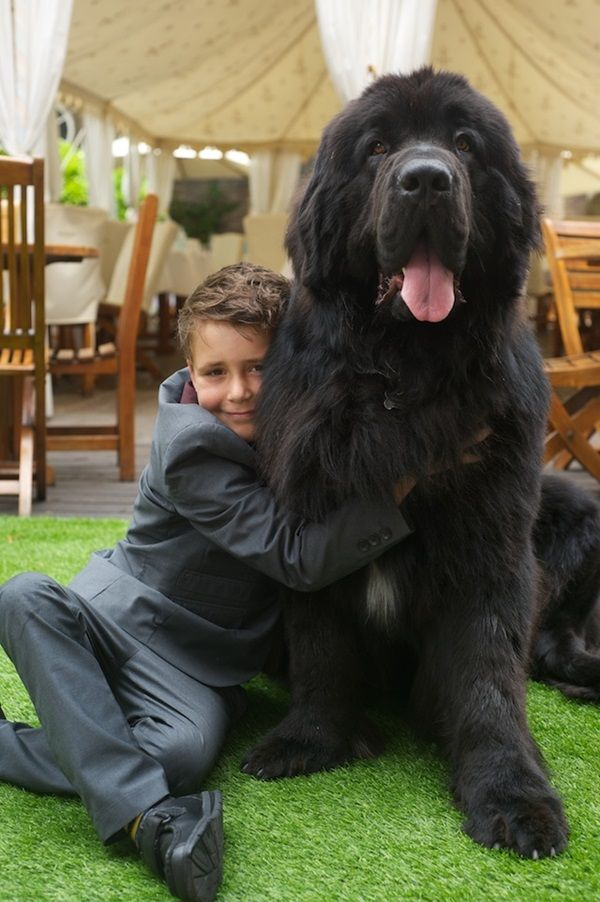 10 Favorite Black Dog Breeds Black Dogs Breeds Dog Breeds Dogs
