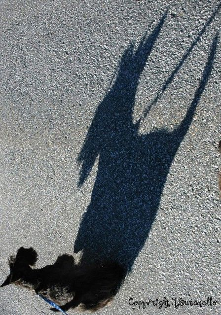 Great BIG Shadow for a Great BIG Personality!