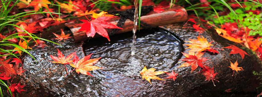 Autumn Leaves In Stream Facebook Covers, Autumn Leaves In Stream FB Covers…
