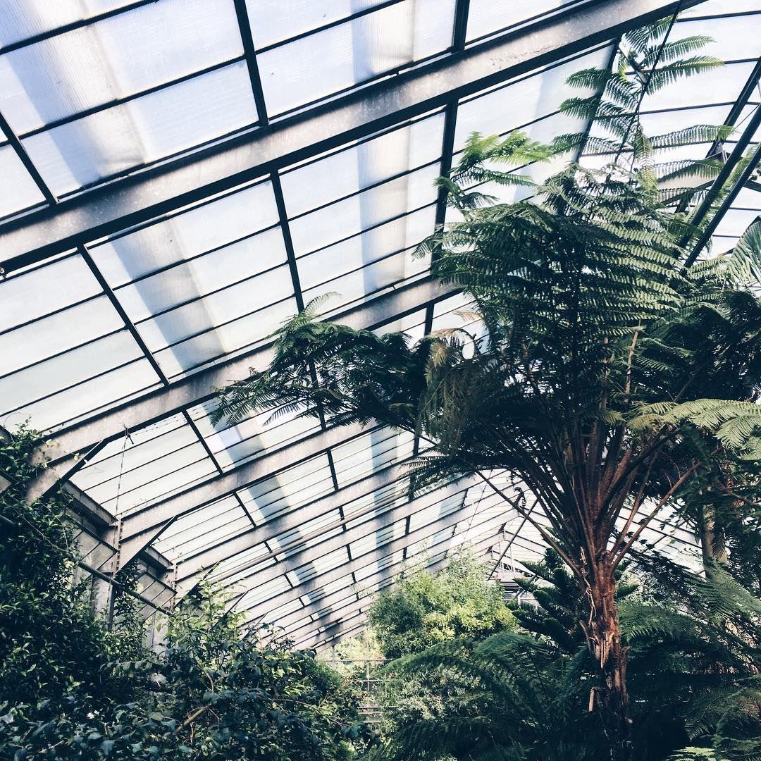 Obligatory visit to this city's botanical garden: check ✔️ #apdmincologne . . . #koelnergram #kolnstagram #botanicalgarden #greenhouses #plantstagram #plantlove