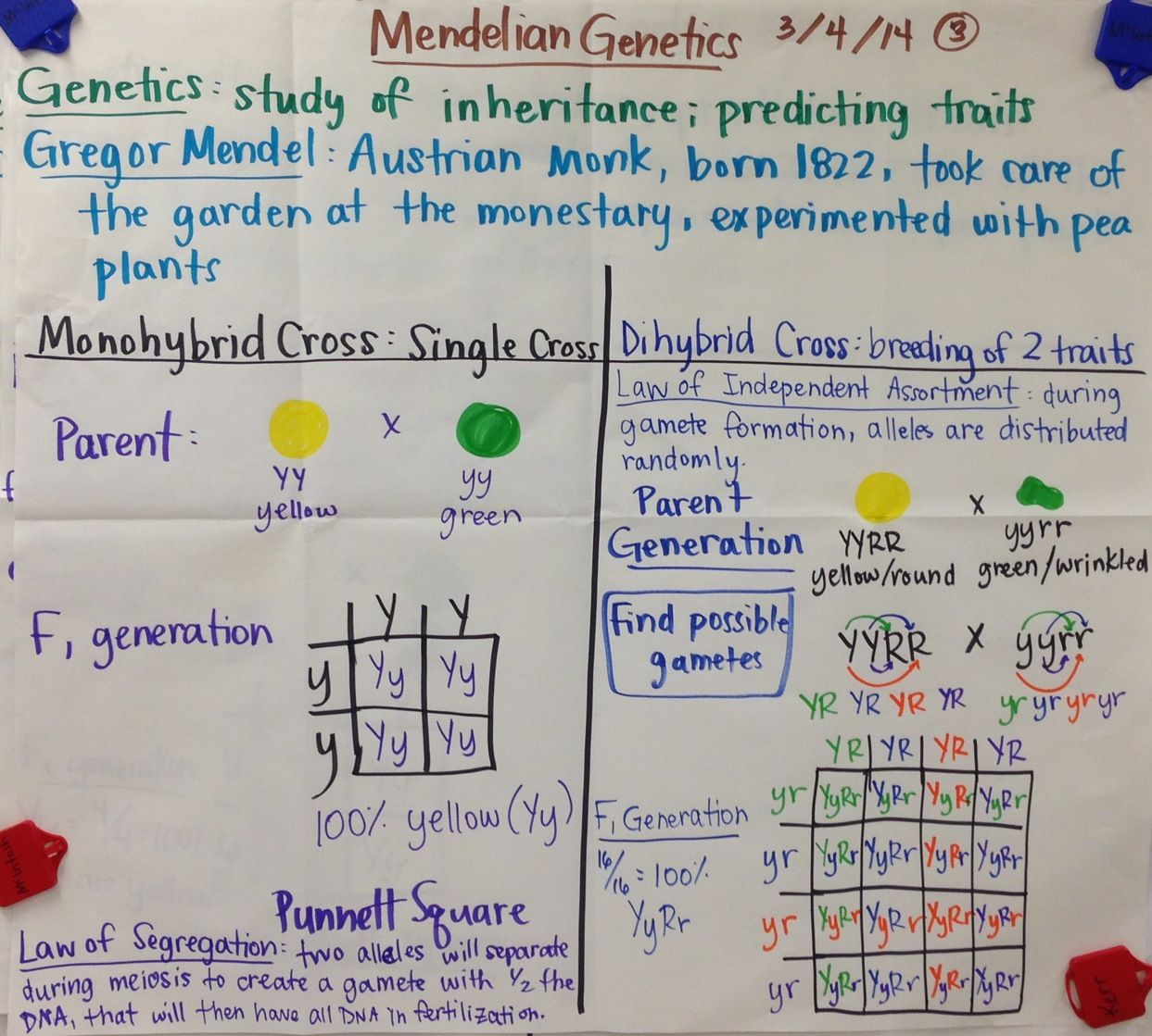 Brooke Mcintosh Charts Notes Biology Biology Lessons Science Biology Teaching Biology