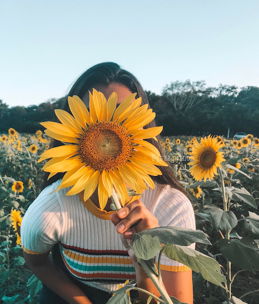 Sunflower Discovered By Maria On We Heart It Sunflowerwallpaper Imagen De Girl Sunflower And Tumblr In 2020 Sunflower Photography Sunflower Photo Yellow Aesthetic