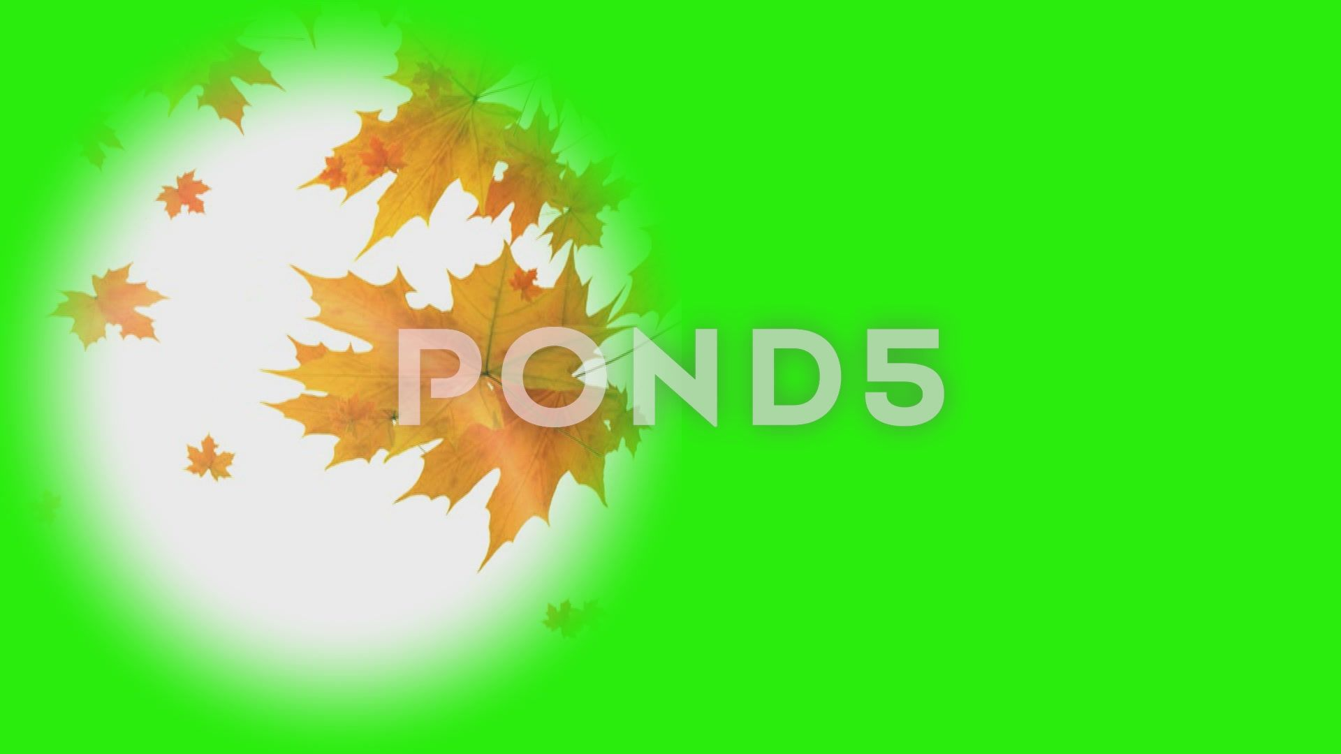 Falling Leaves Mask On A Green Screen Stock Footage Ad Mask Leaves Falling Green Greenscreen Autumn Leaves Green Screen Backgrounds