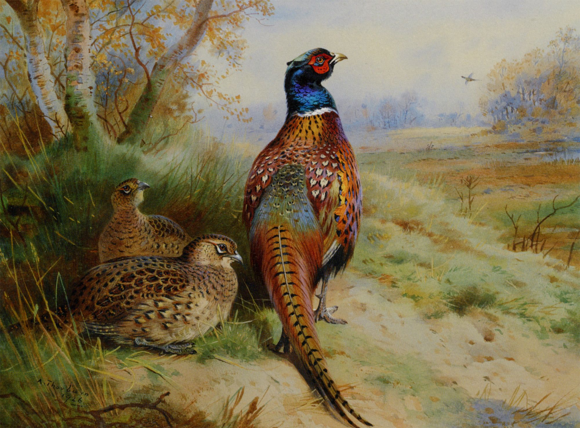 pheasants game birds pinterest pheasant bird and wildlife