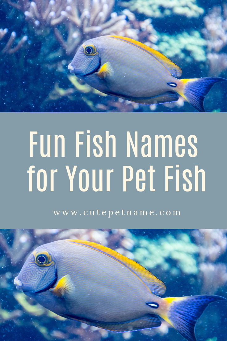 We Posted A List Of 50 Fun Fishnames For Your Petfish At Www Cutepetname Com To Help You Find The Perfect Fish Name Go Ahe Pet Fish Cute Pet Names Pet Names