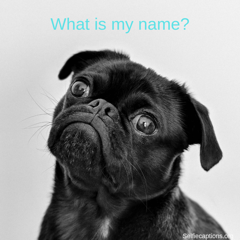 Unique Top 100 Cool Girl Female Dog Names Also Choose The Best