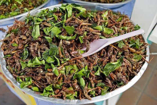 Insekten als Eiweißlieferanten