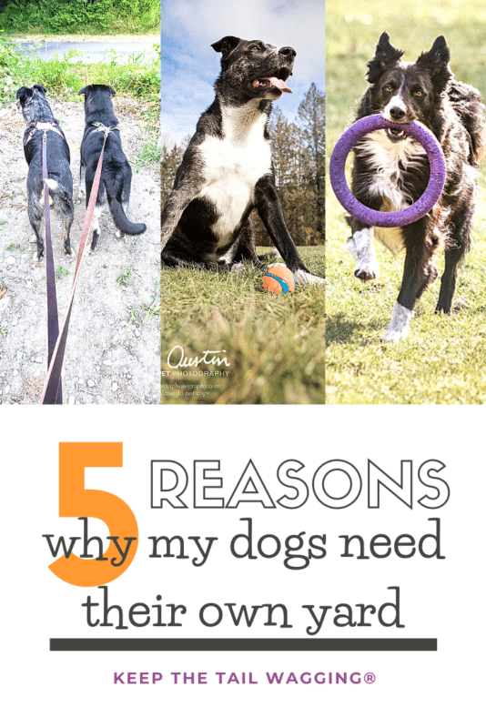5 Reasons My Dogs Need Their Own Yard | Keep the Tail ...