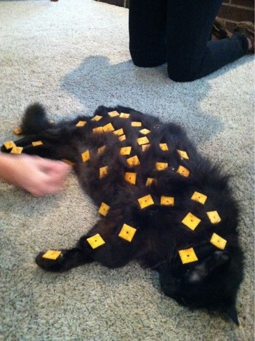 How many Cheez-Its can you put on a cat before it wakes up?