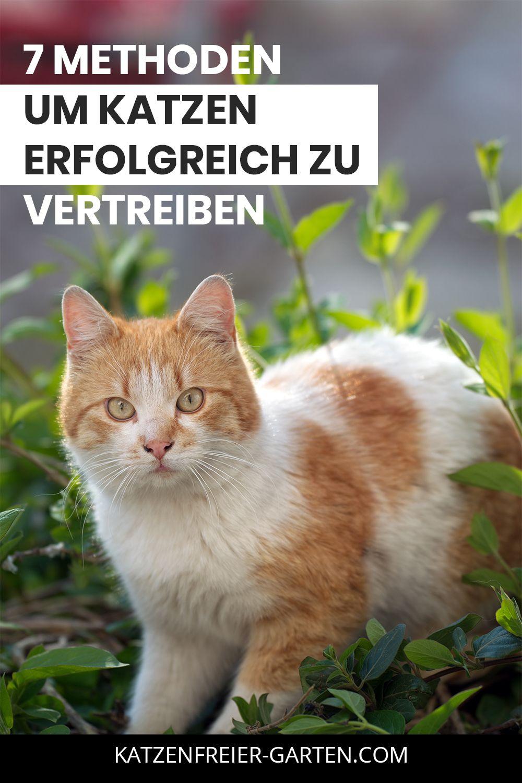 Katze Aus Dem Garten Vertreiben In 2020 Katzen Schreck Vertreiben