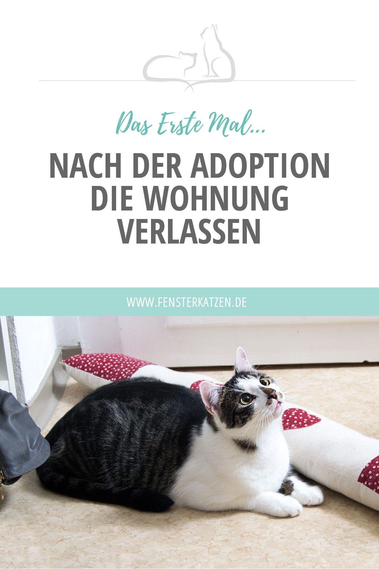 Das Erste Mal Nach Der Adoption Die Wohnung Verlassen Katzen
