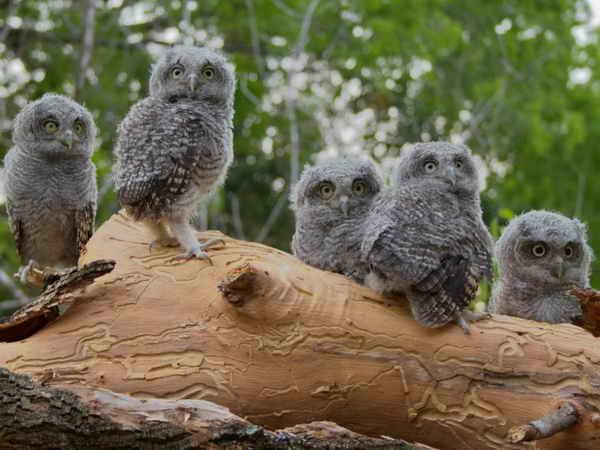 22-Photos-Of-Baby-Owls-11
