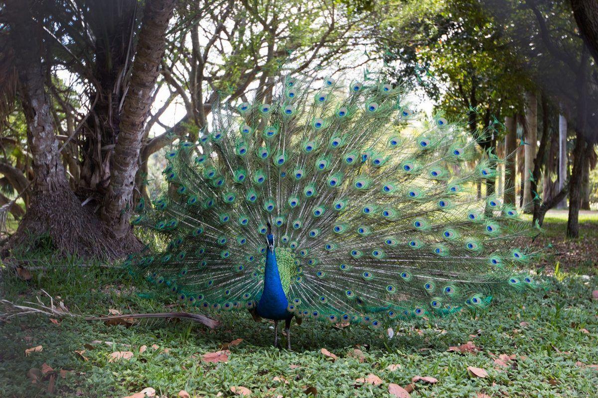 Exploring Crandon Park Gardens A Former Oceanfront Zoo Crandon