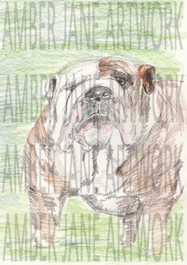 coloured pencil, bull dog, drawing, print, wall decor, wall art, instant download, A4, JPEG by AmberJaneArtwork on Etsy