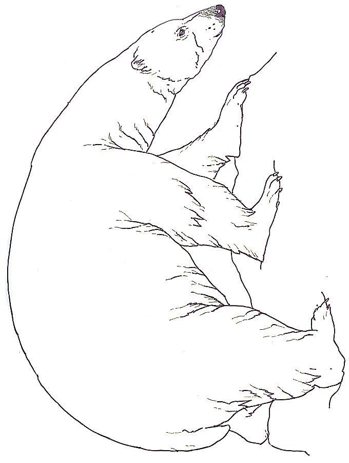 snow bears coloring pages - photo#8