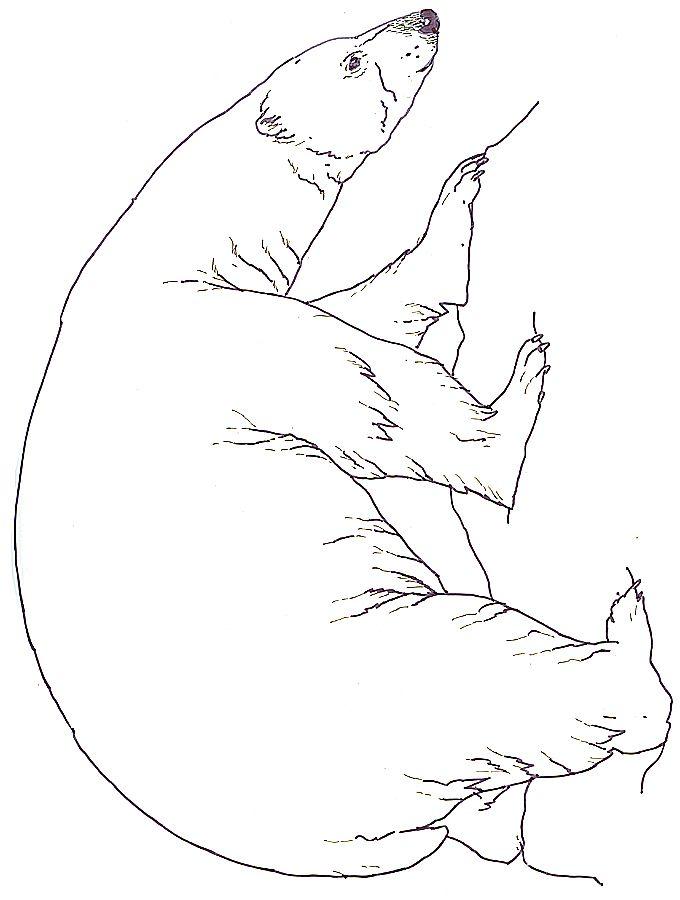 wat ziet de beer? | Téli | Pinterest | Colorear