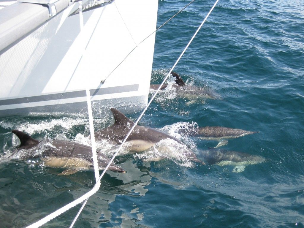 Roam the Greek waters alongside beautiful dolphins on one of Sunset Oia's catamarans