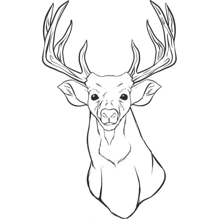 Reindeer Antlers Coloring Pages Video Images