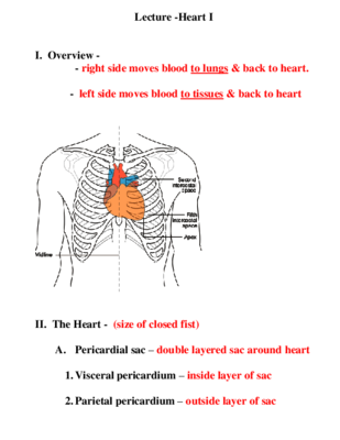 Free Lecture Notes Heart From Kemper Anatomy Labs On